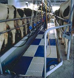 Milking Shed Matting